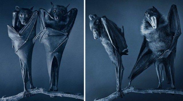 Животные через объектив Тима Флэча в фотоцикле «Больше, чем человек»