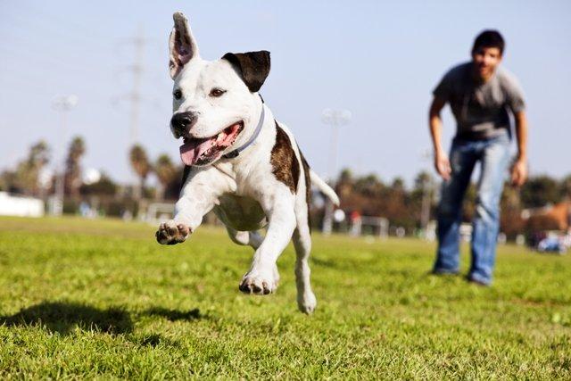 Почему собака выполняет команды дома за лакомство, а на улице нет?