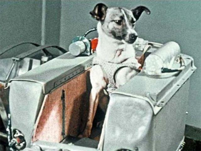 Собаки в истории