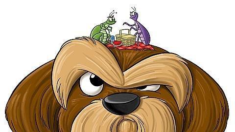 Клещи у собаки: обнаружение, лечение, профилактика