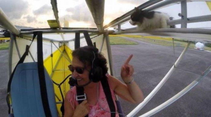 Отчаянный кот прокатился на крыле самолета (6 фото и видео)
