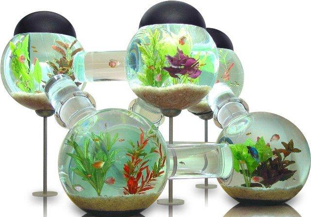 Искусство аквариумистики