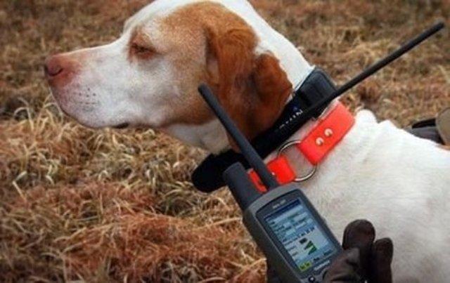 Электронные ошейники для собак: виды и функции