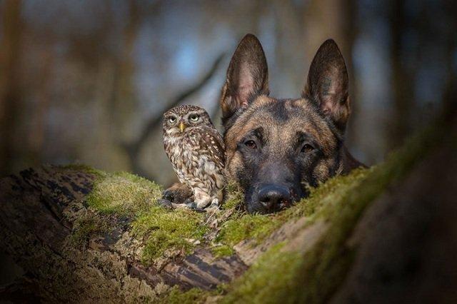 Дружба собаки и совы в фотогрфиях от Тани Бранд