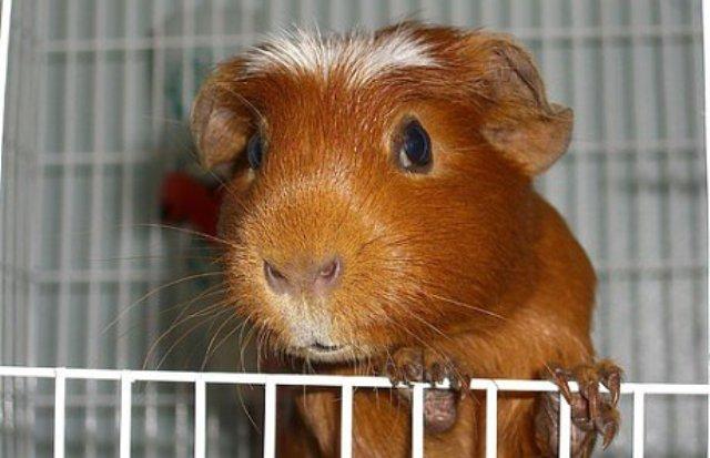 7 мифов о домашних животных