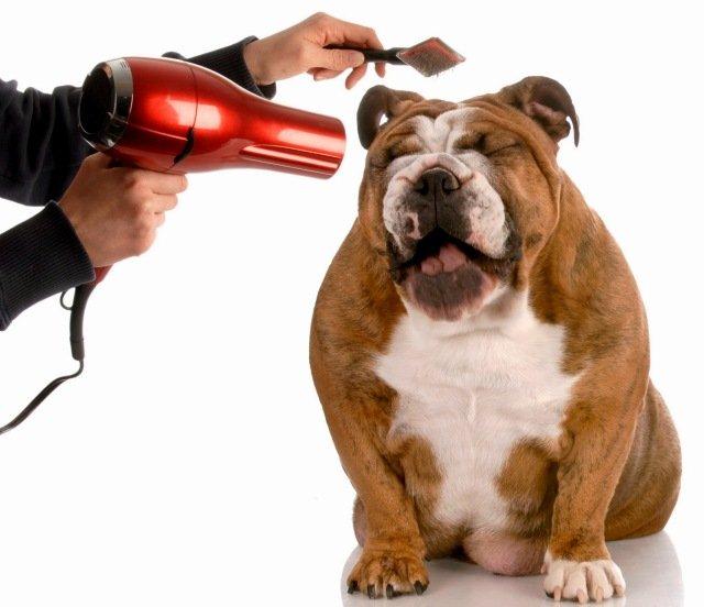 Груминг для собак