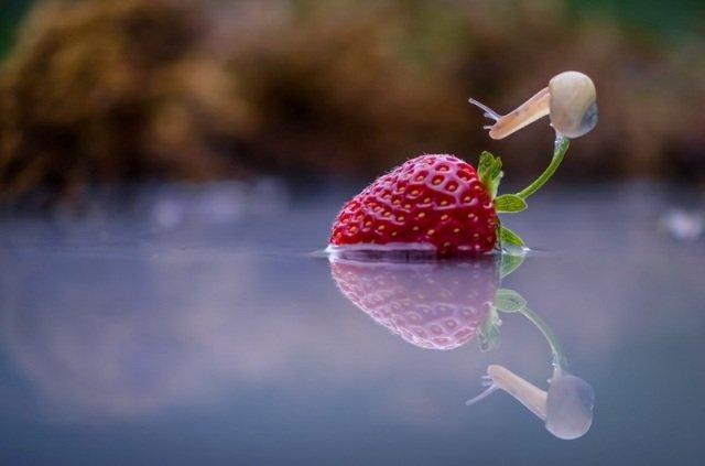 Трогательные миниатюры из жизни улиток от Вячеслава Мищенко (20 фото)