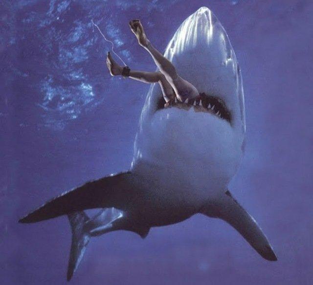 ТОП самых интересных находок в желудках акул