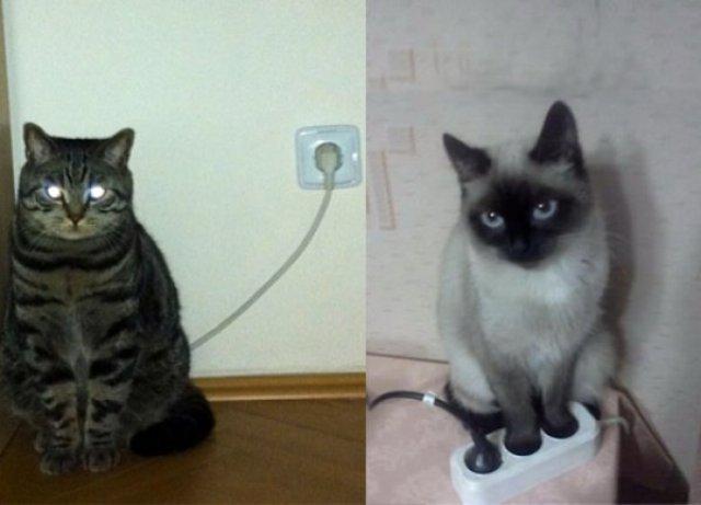 Что делает кот, когда никого нет дома
