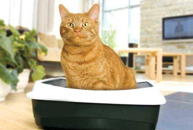Как отучить кошку гадить в неположенном месте: советы и рекомендации