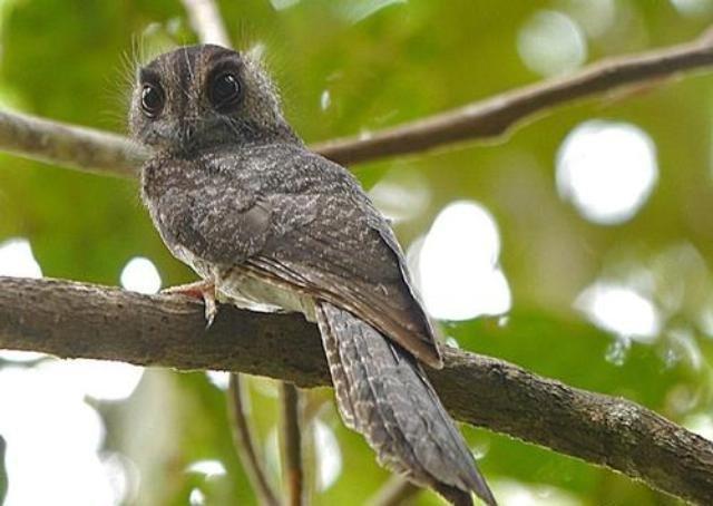 ТОП-10 Самых редких и исчезающих птиц на планете
