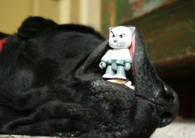 Смешная фотоподборка из серии «Мой хозяин - идиот!» (30 фото)