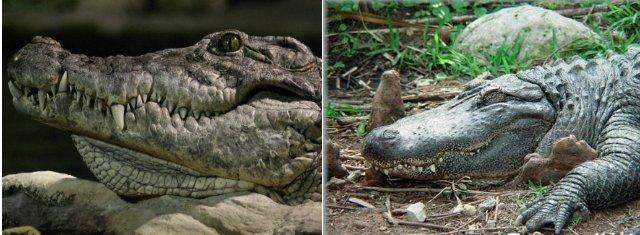7 пар животных, которых часто путают друг с другом