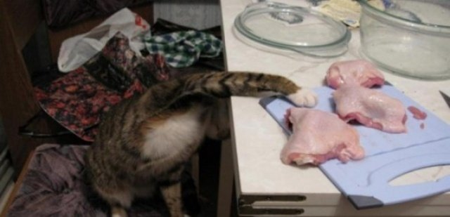 20 котов, пойманных с поличным