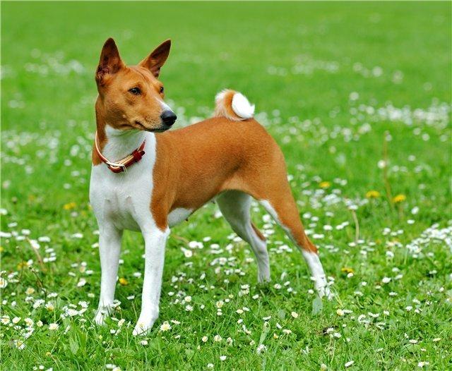 25 интересных фактов о собаках