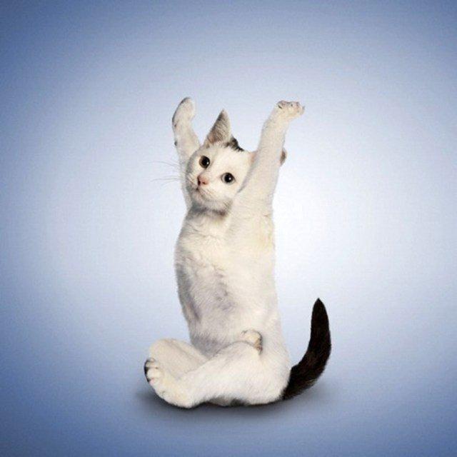 Йога для кошек (20 фото)