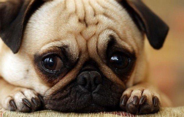 Болезни домашних животных, опасные для человека