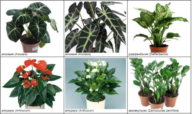 Комнатные растения, опасные для кошек