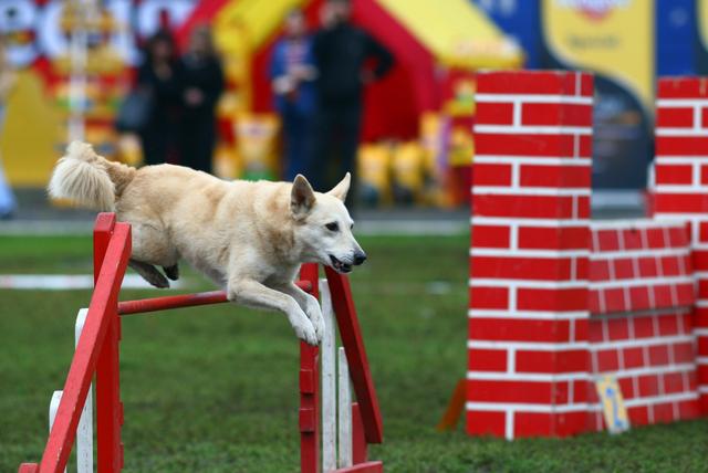 Какой собачий спорт выбрать?