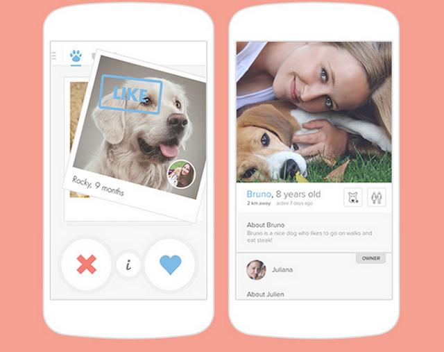 Лай и лайкай! Компания Tinder создала социальную сеть для собак