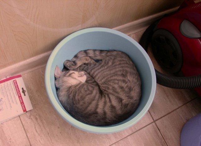 Кошки – это жидкость (25 фото)