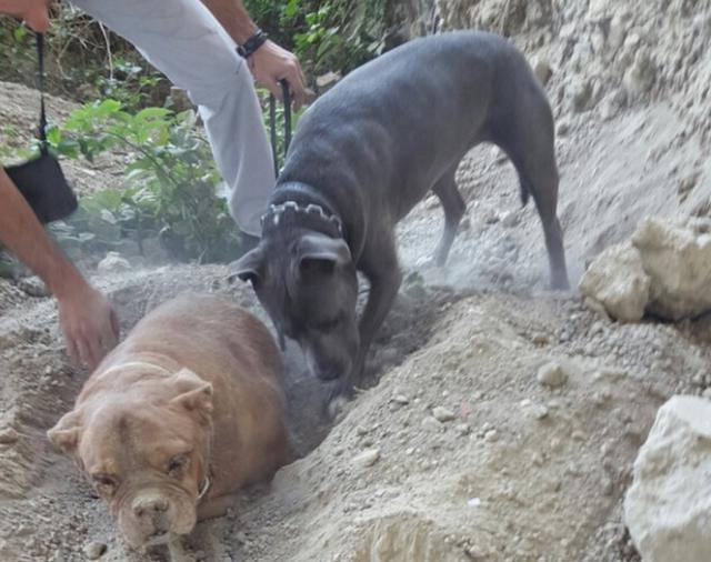 Француз спас заживо захороненного пса