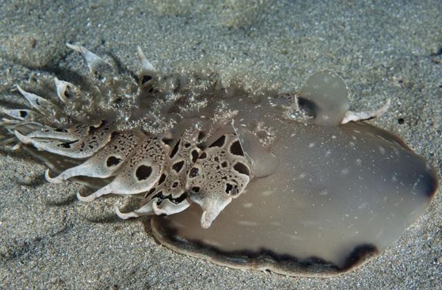 Необычные обитатели морских глубин