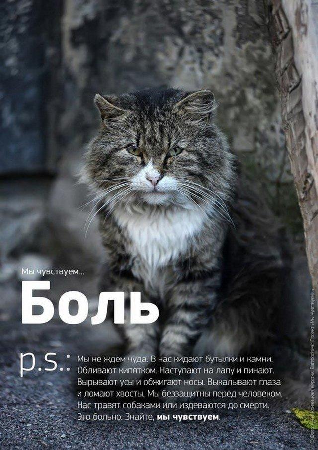 «Мы чувствуем…»: душераздирающий проект о бездомных животных, который заставляет задуматься