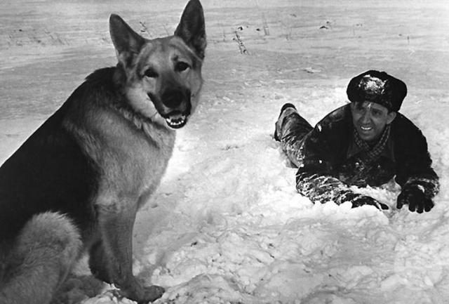 Происхождение старых русских собачьих имен