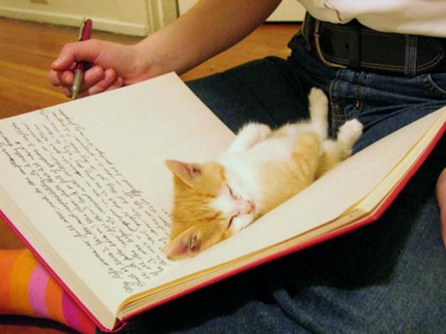 20 фраз и вопросов, которые чаще всего слышат ваши кошки и коты