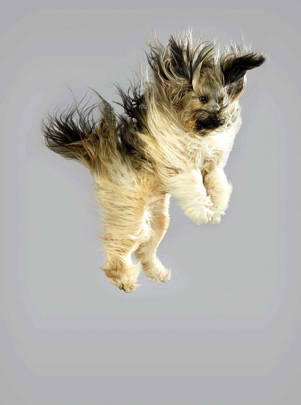 Собаки тоже хотят летать