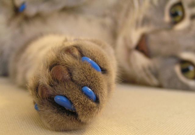 Антицарапки для кошек: вред или польза?