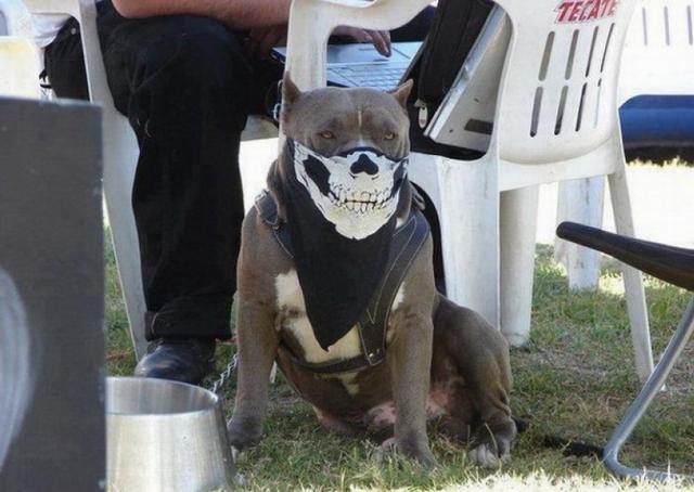 Дизайнерские намордники для собак