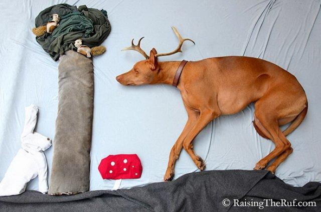 Что снится собаке: прикольная фосессия от Сары Ренмарк