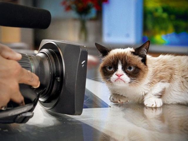 Ученые выяснили, почему видео с кошками так популярны