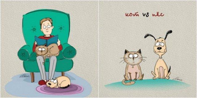6 отличий котов от собак в картинках