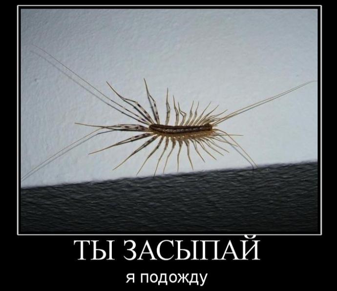 Домашняя мухоловка: знакомство с соседями