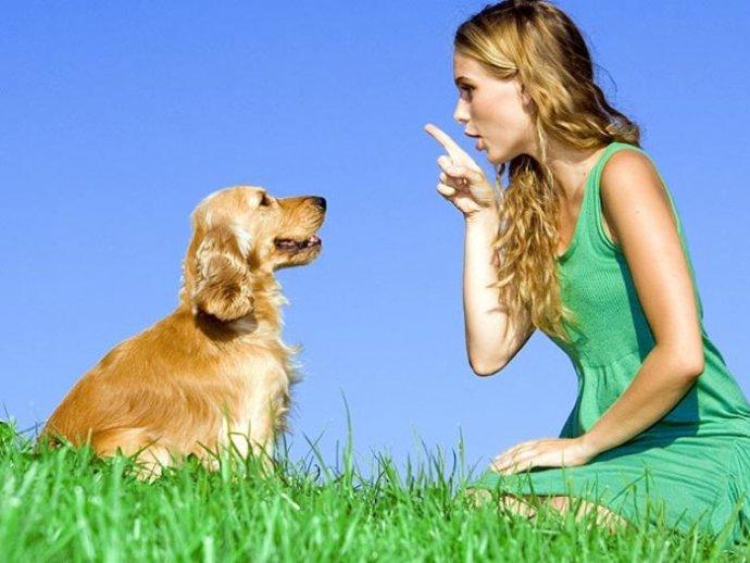 10 типичных ошибок при дрессировке собак