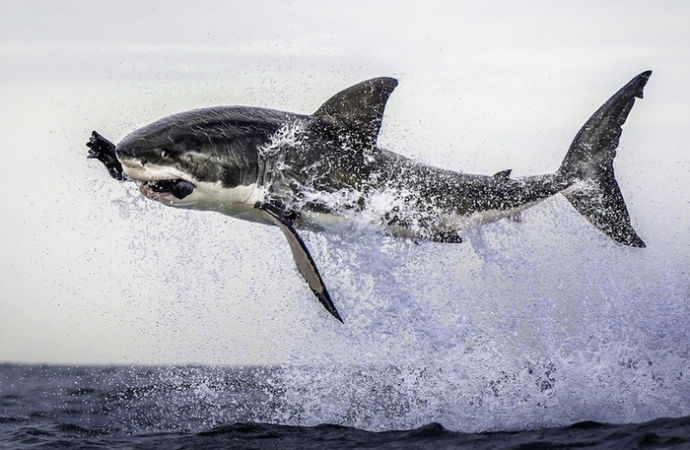 25 впечатляющих снимков, сделанных без фотошопа