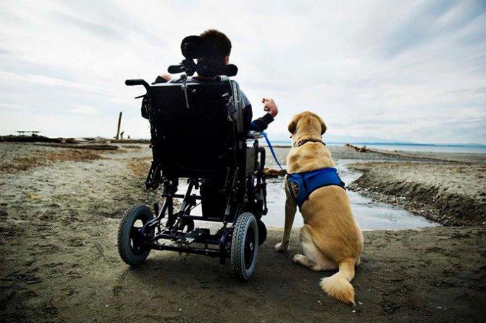 Встать! Суд идет! Собаки помогают участникам судебного процесса снимать стресс