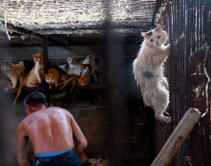 Ужас в глазах кота при попытке вырваться из клетки мясника