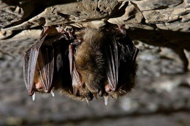 Что вы знаете о летучих мышах?