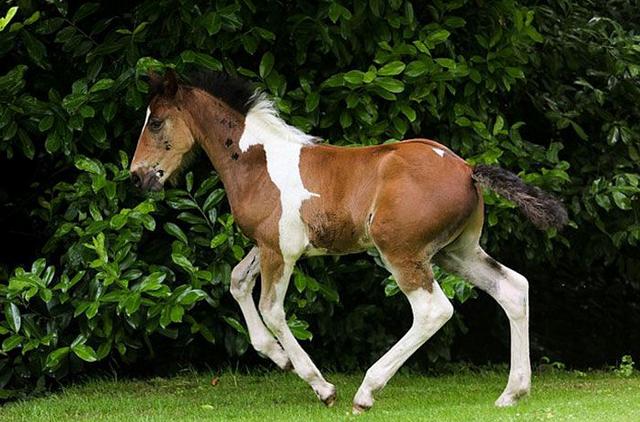 Необычные окрасы у животных