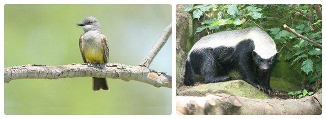 Удивительные взаимоотношения в мире животных