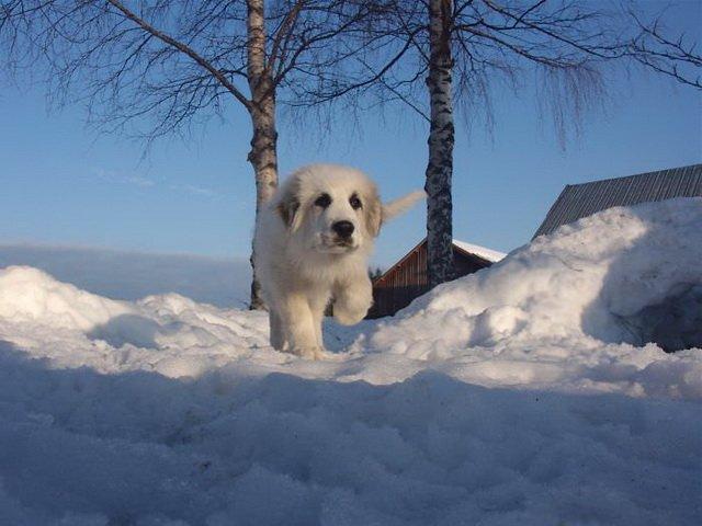 Собаки, которые на снимках выглядят гигантами (24 фото)