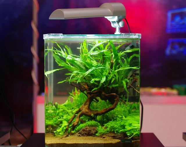 Нано-аквариум – «умный аквариум»