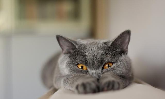 Проверьте IQ своей кошки (тест)