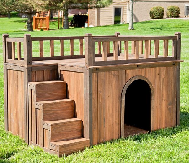 Домик для собаки - как выбрать