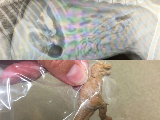 Рентгеновские снимки с шокирующими предметами, которые съели собаки