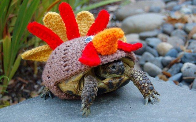 Необычные вязанные костюмчики для черепах от Кети Брэдли